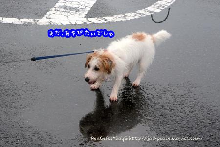 150903_nokami11.jpg