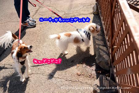 150915_biwako3.jpg