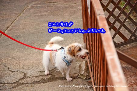150915_biwako4.jpg