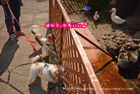 150915_biwako5.jpg