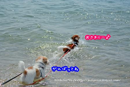 150922_umi1.jpg