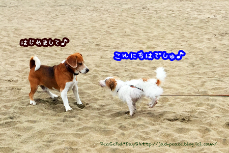 150924_umi1.jpg
