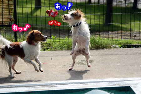 150929_yuasa4.jpg