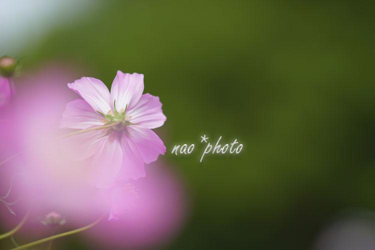 09-11_3783.jpg