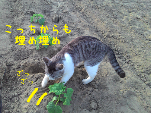 20150827204250298.png