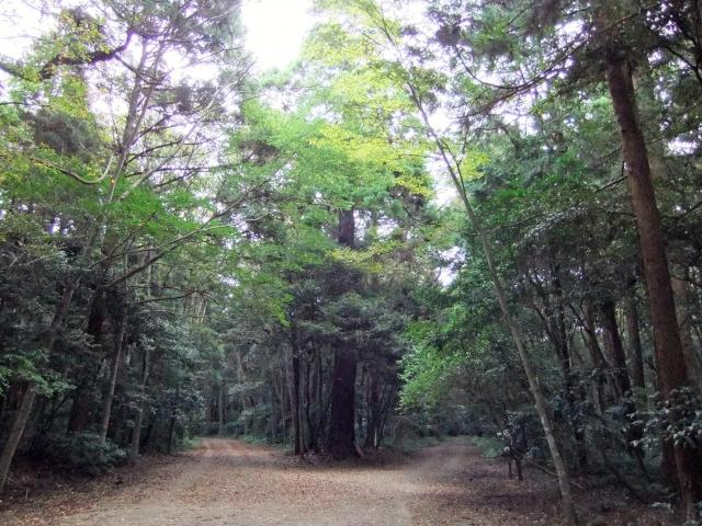 森の中の分かれ道