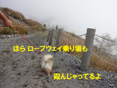 201510051139597fd.jpg