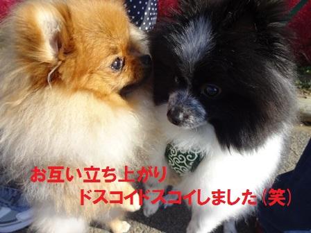 20151019144613ca6.jpg