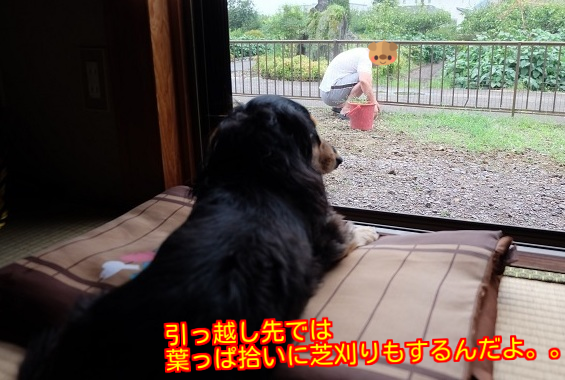 20150821203923a17.png