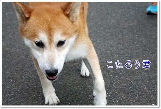 DSC08459.jpg