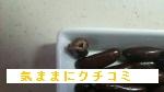 みなさまのお墨付き 柿の種チョコ 西友 画像⑤