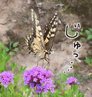 20150824c.jpg