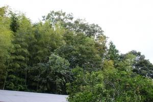 150930栗の木