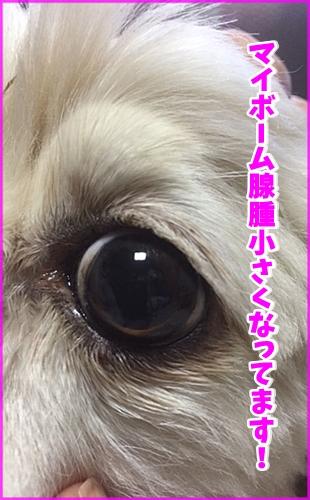 201509100032034ec.jpg