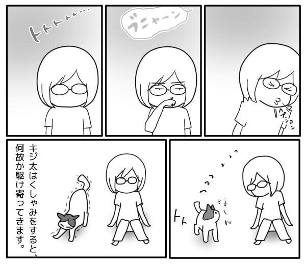 猫とくしゃみ