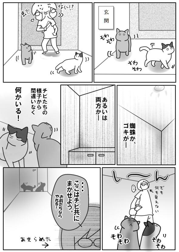 玄関の虫22