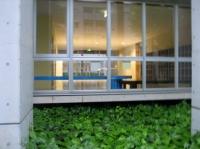 ガラス張りの学校