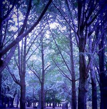 aw代々木公園と善福寺川 305