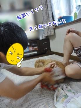 kinako3148.jpg