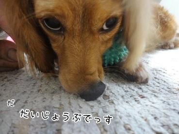 kinako3151.jpg