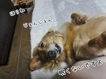kinako3167.jpg