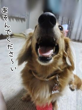kinako3202.jpg
