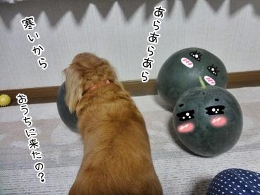 kinako3249.jpg