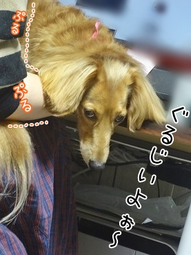 kinako3279.jpg