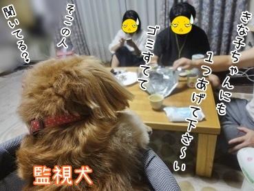kinako3286.jpg