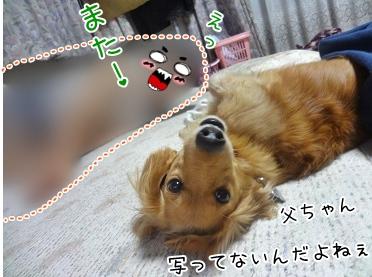 kinako3321.jpg