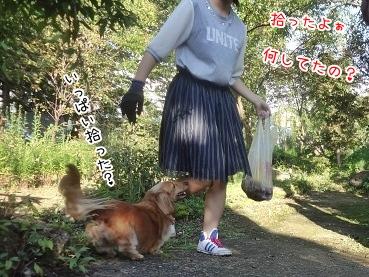 kinako3338.jpg
