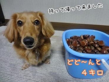 kinako3340.jpg