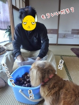 kinako3343.jpg