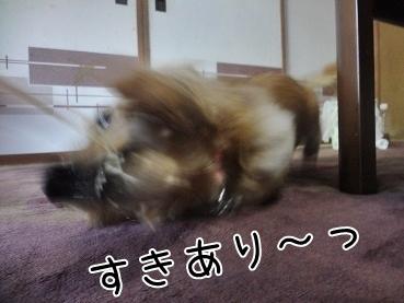 kinako3345.jpg