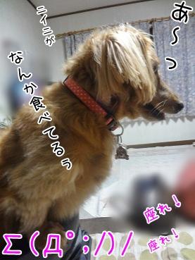 kinako3394.jpg