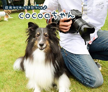 cocoasan.jpg