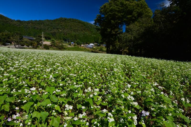「蕎麦の花咲く山村2」   (香川県まんのう町)