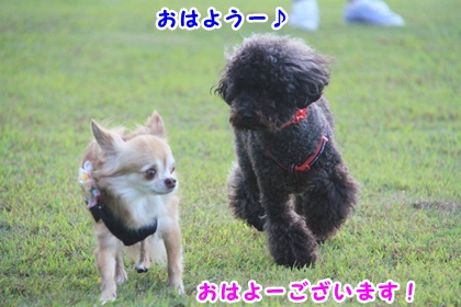 7_201509301657115fa.jpg