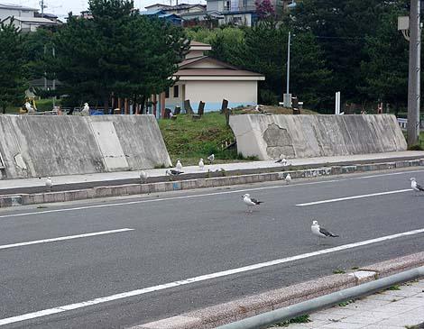 umineko_hati6.jpg