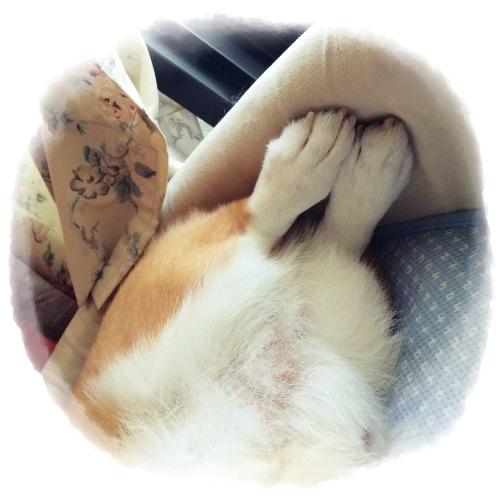 ashijiro1.jpg