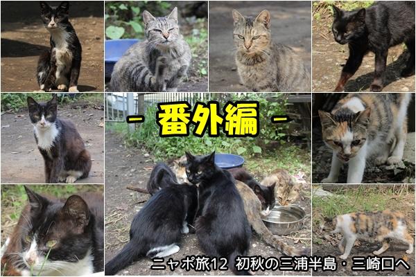 三崎口 猫 ニャポ旅12番外編