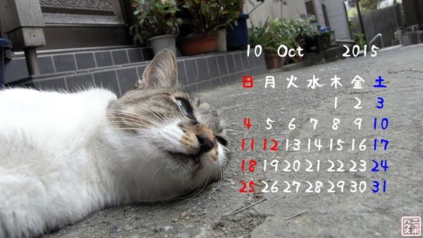 10月の猫デスクトップカレンダー