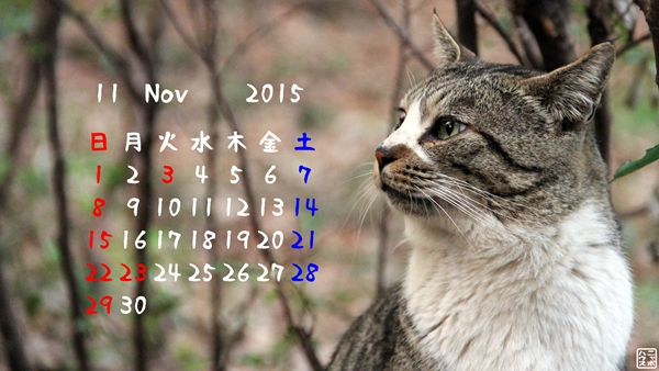 野良猫 デスクトップカレンダー 2015/11