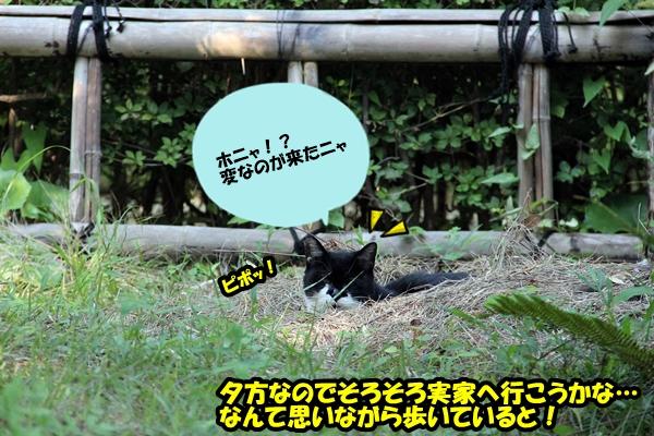 浜松城公園 猫