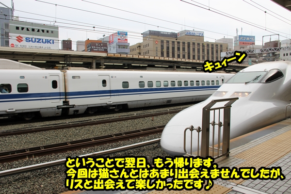 ニャポ旅in浜松