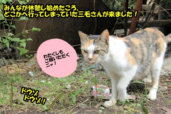 ニャポ旅12 三浦半島・三崎口 猫