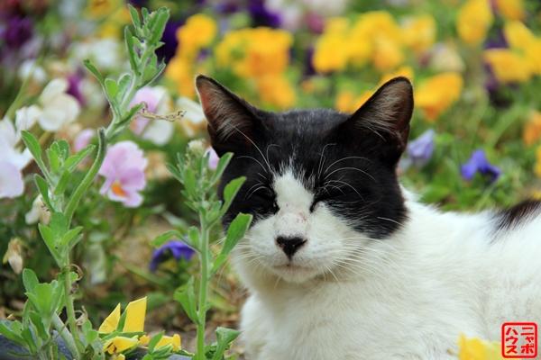 お花畑 シロクロ猫 名古屋