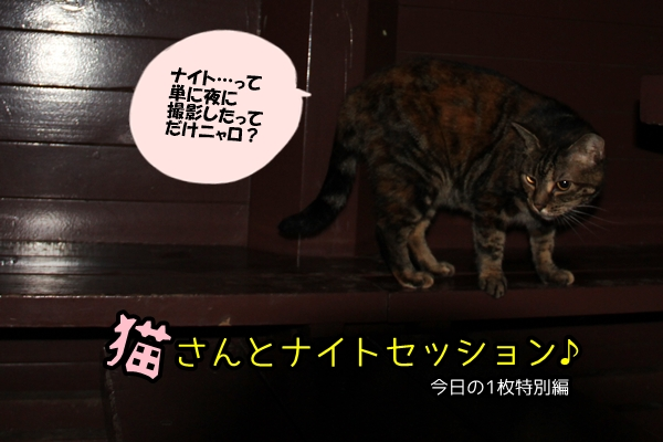猫さんとナイトセッション♪