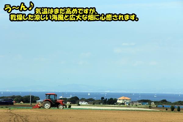 ニャポ旅12 三浦半島・三崎口