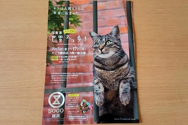 岩合さんの世界ネコ歩き写真展